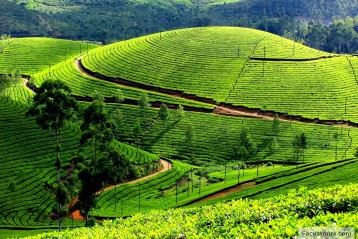 Ooty Tour Package 02 Nights 03 Days