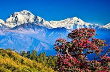 Thimphu/Wangdue/Punakha/Paro 04 Nights / 05 Days